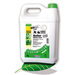 Aster citron vert
